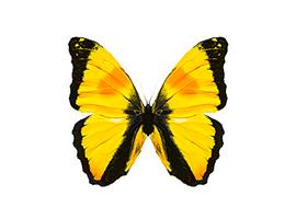 관상어/곤충